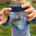 Garden fun: Bug Hunting