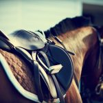 Healthy Ways to feed Your Horse