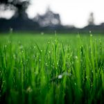 Winter is Coming – Prepare Your Lawn