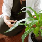 5 Factors why you need a houseplant